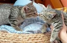 離ればなれになった子猫の兄弟