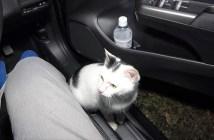 車に乗り込んできた子猫