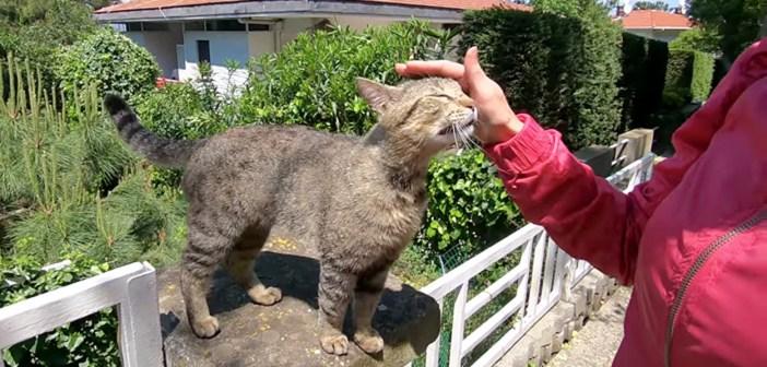 アヒルのように鳴く猫