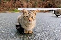 見つめてくる子猫