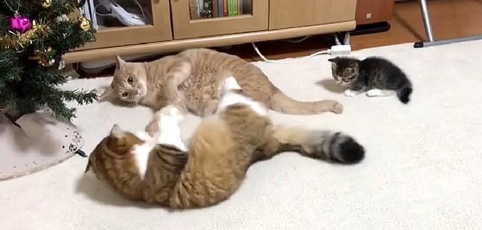 ケンカを仲裁する子猫