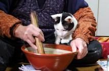 くるみ餅作りを見守る猫