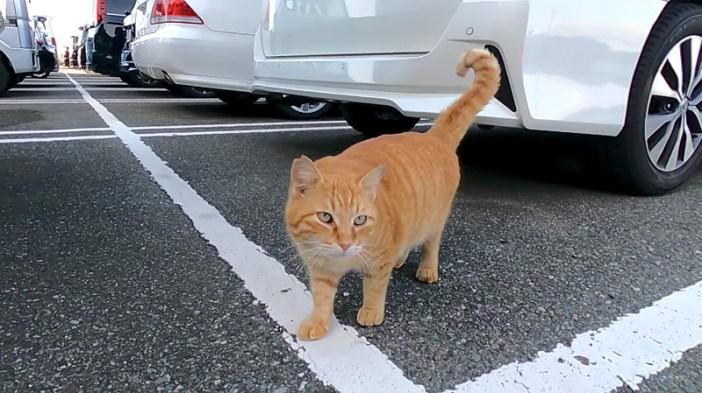 話し掛けてくる猫