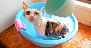 掛け湯を堪能する猫
