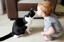 仲良しな猫と赤ちゃん