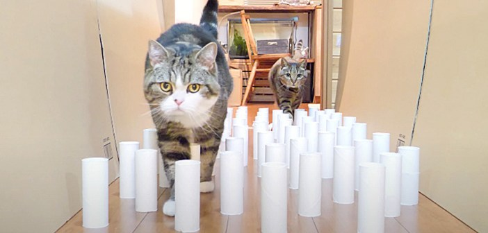 トイレットペーパーの芯ロードと猫