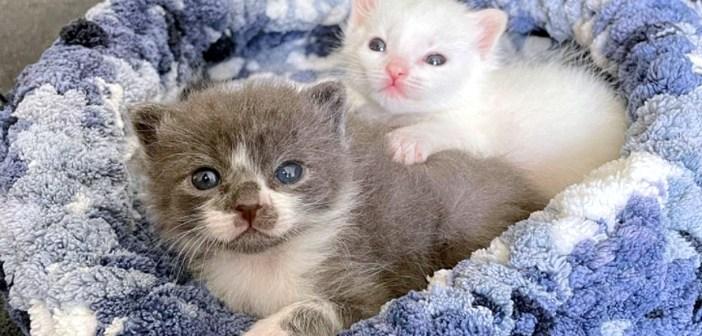 保護された子猫隊