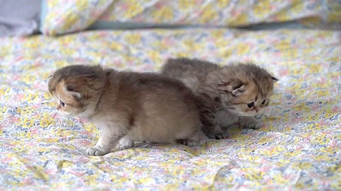 歩く子猫達