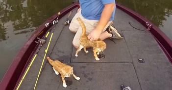 川を泳いで来た子猫達