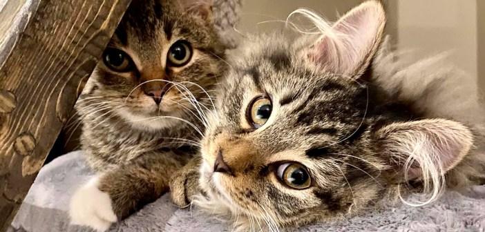 ポーチの下に隠れていた内気な子猫。友達を必要としていた別の子猫との出会いで自信が芽生え、幸せな毎日を送り始める!