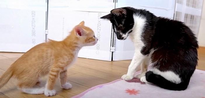 猫の初対面