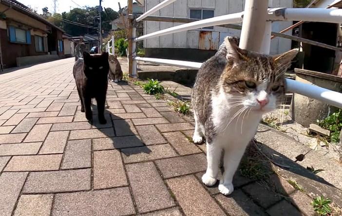 集まってきた猫達