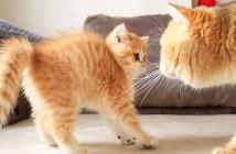 父猫と初対面する子猫