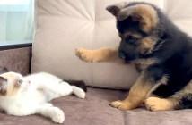 子猫と子犬