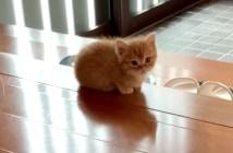 玄関で待つ子猫