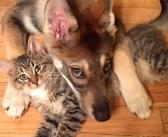 保護施設に出かけた愛犬が、1匹の子猫に一目惚れ! 子猫を家族に迎えると、毎日が驚くほど幸せいっぱいに!