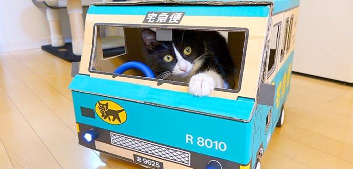 ダンボールカーに乗る猫