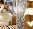 ハートマークのある猫
