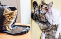 保護先で幸せになった子猫