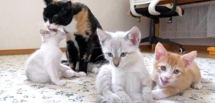 子猫達を可愛がる猫