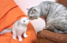 子猫と新しいお父さん