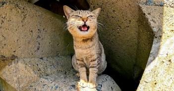 抗議する猫