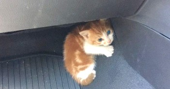 車の中に隠れる子猫