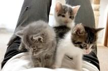 お腹の上に避難する子猫達