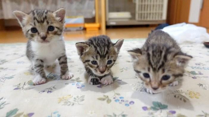 よちよち歩きの子猫達