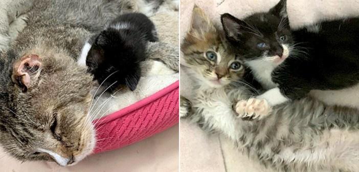 病気を患いながら、独りぼっちで彷徨っていた子猫。保護先で抱き締めることのできる友達と出会うと、人生が大きく変わる