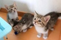 ゲリラ豪雨で避難する子猫達