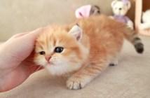 シッポを振る子猫