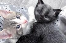 子猫の友達