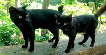 猫神社で出会った猫