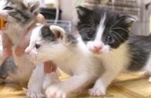 子猫達のミルク争奪戦