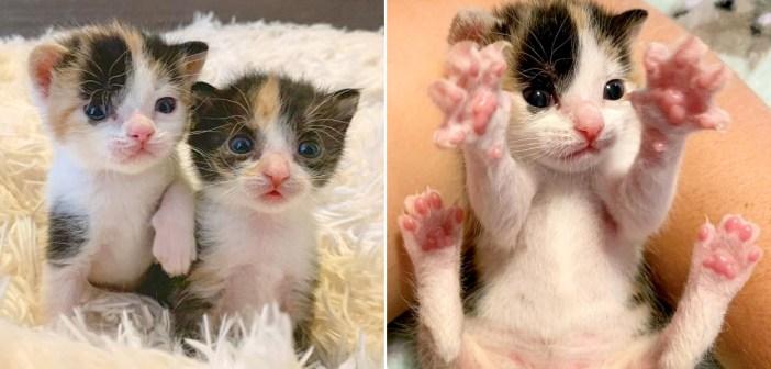 仲良し子猫姉妹