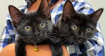 抱っこされる子猫達