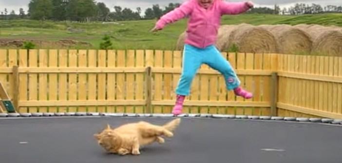 トランポリンの上の猫