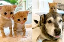 愛らしい子猫達