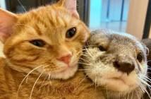 寄り添う猫とカワウソ