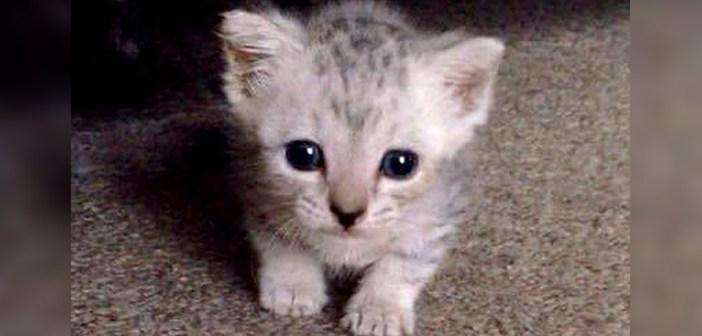 玄関先で鳴いていた子猫