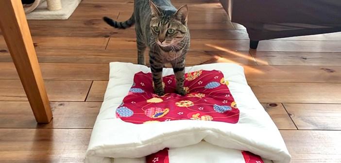 猫布団を敷いてみると、思いのほか大好評!? 2匹の猫達が猫布団に興味を持つまでの様子がとっても可愛かった ( *´艸`)♡