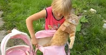 赤ちゃんになりきる猫さん