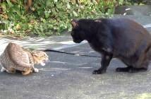 黒猫と対峙する子猫