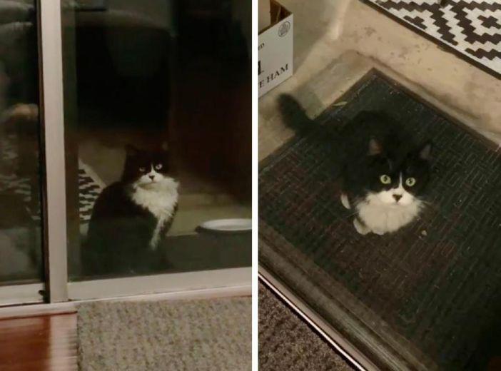 窓の外に現れた猫