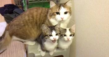 洗面台が気になる猫達