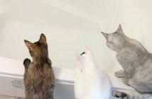 湯はりが気になる猫達