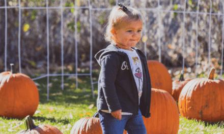 Pumpkin Picking in Eureka