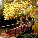 Pond Mountain Resort