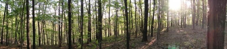 Eureka Springs; dogwood